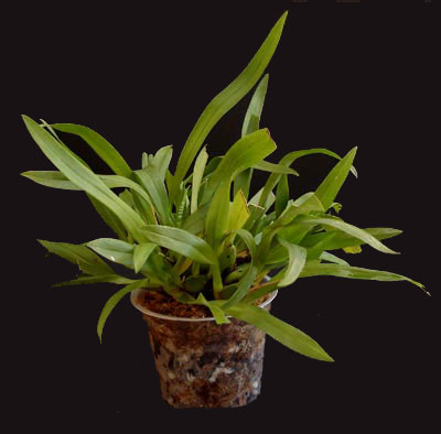 How To Identify An Orchid